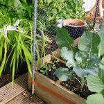 Bruggetje van planten