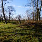 Achter in de tuin, bult met takken, grond en rotzooi