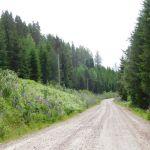 Dagrecord cachen in Zweden