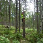 Alfabet caches, Zweden