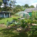 Tuin in augustus 2019